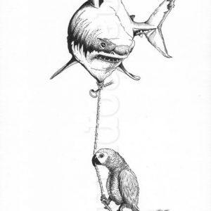 Haai-papegaai